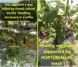 vegetable support