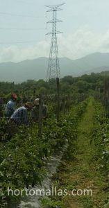 Labores agrícolas y estrés mecánico