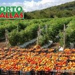 malla para tomate