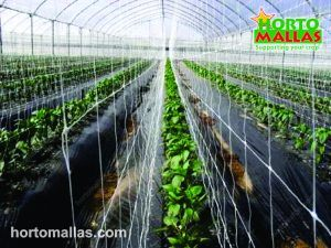 The double mesh gives the crops a better support, reducing the labor and the contagion of diseases by mechanical transmission