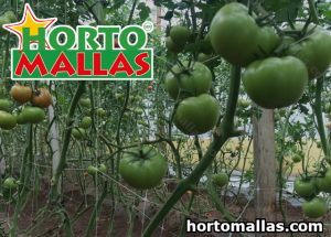 HORTOMALLAS® crop support netting