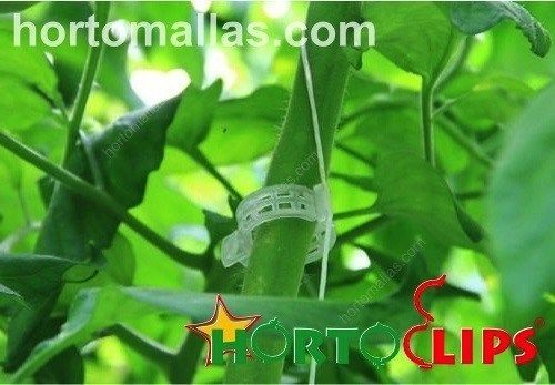 HORTOCLIPS tutoring rings together with HORTOMALLAS support netting provide the complete tutoring solution for vegetable crops.