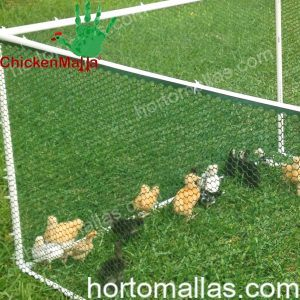 Plastic poultry mesh protecting young chicks