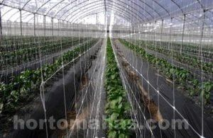 la red espaldera para hortalizas