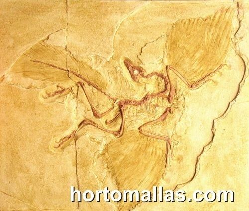 Archaeopteryx fosil ancestral de las aves