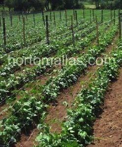 Tutor para hortalizas