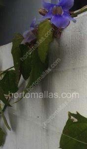 MALLA PARA ENREDADERAS con flores de ornato
