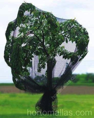 tree protected with GUACAMALLAS birdnets