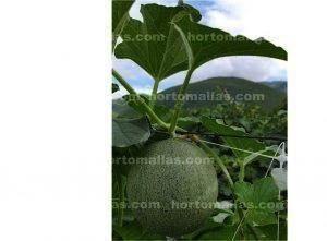 malla para melones