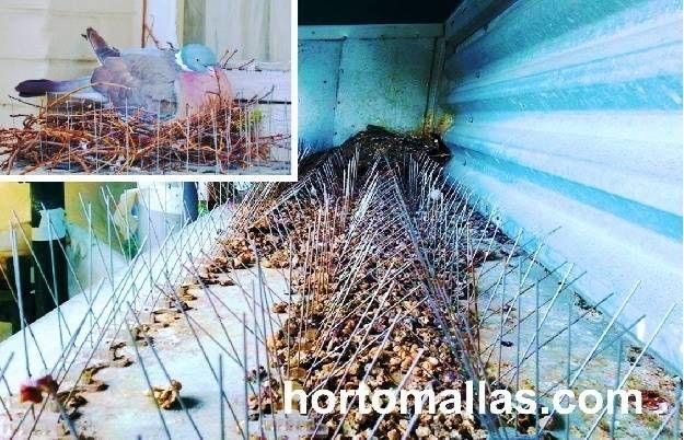 nido de palomas en cornisa cubierta con pinchos