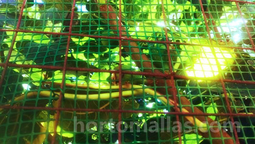 Malla portarosa como protección para arboles frutales residenciales