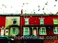 Palomas intentando sobre un edificio antiguo, una posible solución sería la malla Anti-Palomas GUACAMALLAS®