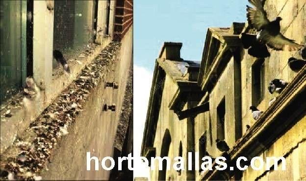 Palomas utilizando como percha cornisas de edificios antiguos y departamentos. La malla anti palomas GUACAMALLAS evita este problema.
