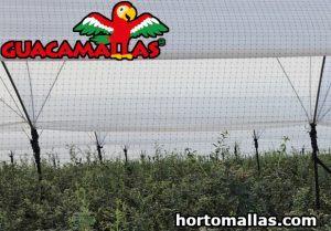 bird net in field