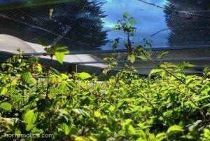 Berries protegidas con mallas