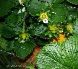 Cultivo de flores protegida con malla