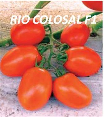 RIO COLOSAL