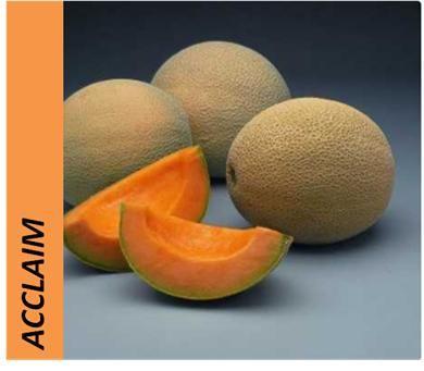variedad de melon
