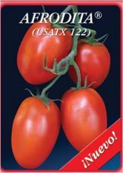 semilla de chiles