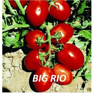 BIG RIO