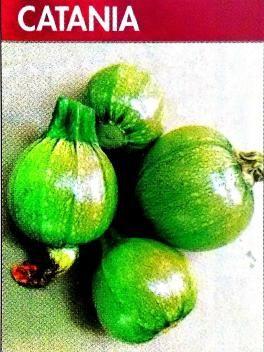 CATANIA Abóboras híbridas redondas, uniformes de cor verde-clara. Planta de caule/talo único, de alta frutificação e flor feminina. Variedade muito produtiva, excelente para o mercado de produtos frescos. Resistência intermédia ao Oídio e ZYMV.