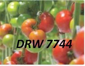 semilla-drw