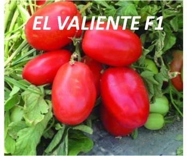 EL VALIENTE