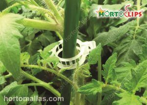 HORTOCLIP tomato ring attached to support system on tutor netting or agricultural raffia.