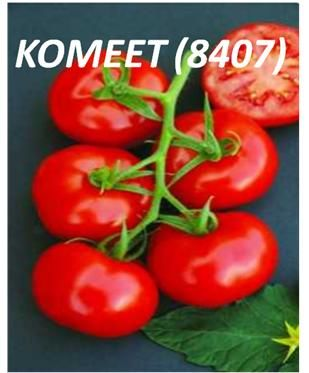 semillas de tomates redondos