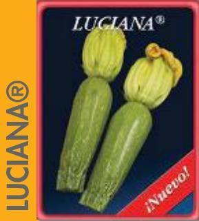 LUCIANA Novas abóboras híbridas, tipo Grey Zucchini. Precoce, com bom porte e planta aberta, o que contribui para uma colheita fácil. Fruto cilíndrico, tamanho de 11,9 x 4,2 cm. Excelente variedade em todas as regiões de produção. R: ZYMV, WMV, PRSV, SLCV.