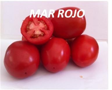 tomate-mar rojo