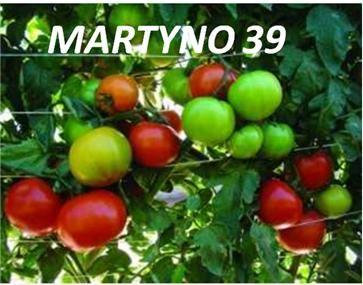 semilla de tomates
