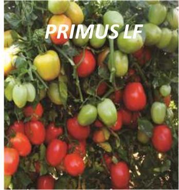PRIMUS LF