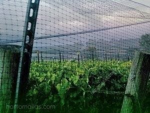 Encajonamiento de cultivos