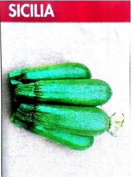 SICILIA Abobrinha híbrida do tipo Gray Zucchini, de forma longa e oval, com tamanhos médios. Atinge a maturidade de 32 a 42 dias. Tolerância ao Míldio e Oídio. A planta é de folhagem aberta e compacta que permite uma colheita fácil.