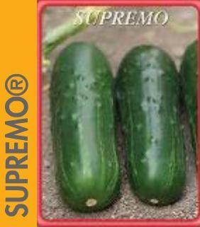 semilla de pepino