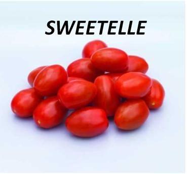 SWEETELLE