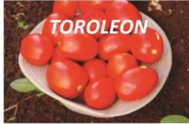 TOROLEON