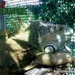 malla plástica para jaula de iguanas