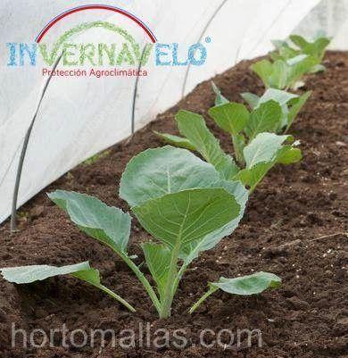 Tela antiheladas como protección para brotes de hortalizas