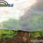 Vegetales cubiertos con tela anti heladas INVERNAVELO