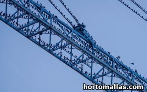 Pigeons on construction crane