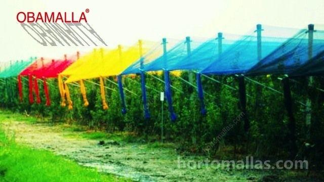 pruebas-con-diferentes-colores-de-malla-sombra-obamalla-en-cultivos-de-frutales-campo-abierto