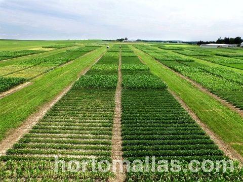 La rotación de cultivos