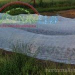 tela anti heladas en cultivo de hortalizas en campo abiertop