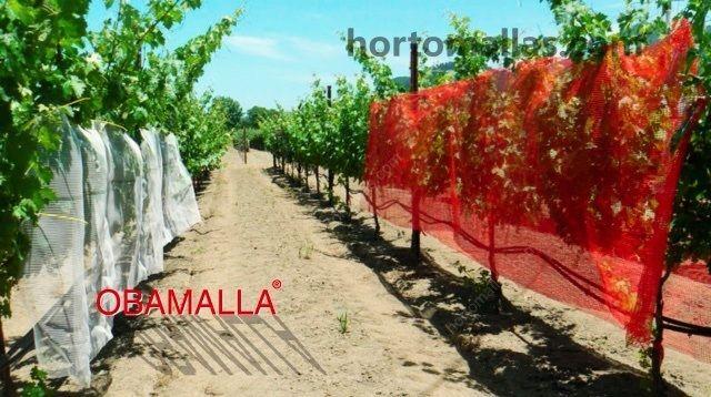 pruebas-con-malla-soombra-roja-y-blanca-en-cultivo-de-uva-campo-abierto