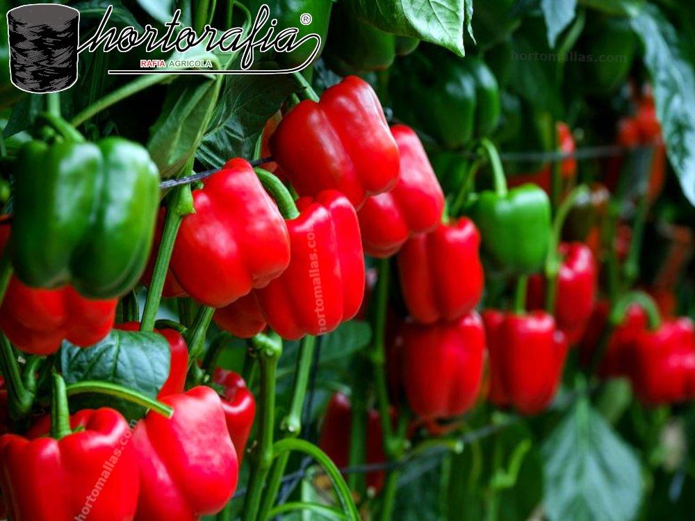 Red para entutorar eficientiza el soporte de hortalizas en el campo.