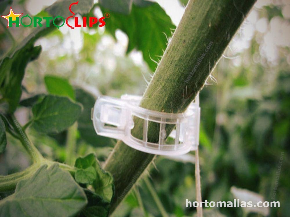 Anillo de tutoreo HORTOCLIP y malla espaldera HORTOMALLAS en conjunto brindan un completo tutoreo a los cultivos de hortalizas.