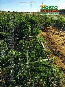 trellising net