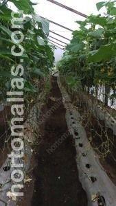 使用支撑网支撑,黄瓜植株得以更好的支持。
